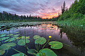 'Sunset over an unnamed lake with water lilies along the Yellowhead Highway; British Columbia, Canada'
