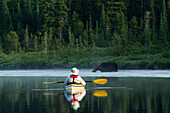 'Man in a kayak approaching a moose in La Mauricie National Park; Quebec, Canada'