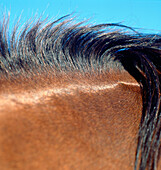Close Up Of Horse Mane