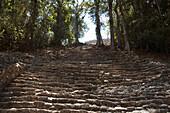 Staircase To Building 33, Yaxchilan, Chiapas, Mexico