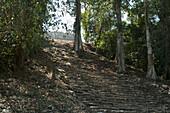 Stairs To Building 33, Yaxchilan, Chiapas, Mexico