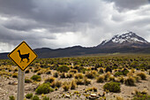 Llama Crossing Sign And Nevado Sajama, Sajama National Park, Oruro Department, Bolivia