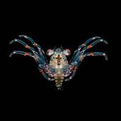 'Tiny crab megalops larva underwater at nighttime; Island of Hawaii, Hawaii, United States of America'