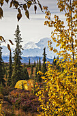 View of tents in Wonder Lake campground with Mt. McKinley Denali on the horizon in the background, fall colored vegetation in foreground, Denali National Park, Alaska. Fall.
