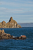 'Pacific walrus Odobenus rosmarus group of males hauled out on Flat Rock with ''Dragon's Tail'' in the background, Walrus Islands State Game Sanctuary, Round Island, Bristol Bay, Western Alaska, USA'