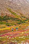 Three backpackers are hiking up the Hidden Lake Trail in the Chugach State Park on an autumn day in Southcentral Alaska.
