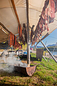 A drying rack above a barrel drum stove smoking filets of Chum salmon, Shungnak, Arctic Alaska, summer