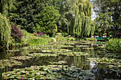 water garden and its water lilies (lily pads on the pond), the impressionist painter claude monet's house, giverney, eure (27), normandy, france