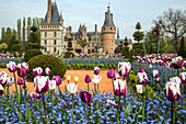 the spring tulips, french-style gardens created in 2013 following the original plans by andre le notre commissioned by louis xiv for francoise d'aubigne, chateau de maintenon, eure-et-loir (28), france
