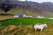 horse in front of a farm, eastern fjords, iceland, europe