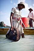 Fischer traegt gefangenen Rochen an Land (Grey Spotted Ray), am Beach No.3, Ostkueste, Havelock Island, Andaman Islands, Union Territory, India