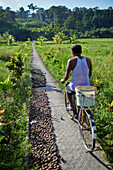 Cyclist on path near Village No. 7, rice fields, Havelock Island, Andaman Islands, Union Territory, India