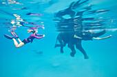 Schwimmender Elefant Rajan, Schnorchler und Taucher der Barefoot Scuba Tauchschule begleiten ihn, am Beach No. 7, Havelock Island, Andaman Islands, Union Territory, India