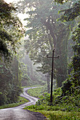 Great Andaman Trunk Road, about 20 - 30 km south of Diglipur, North Andaman, Andaman Islands, Union Territory, India