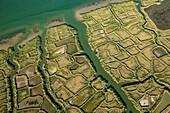 France, Western France, Charente-Maritime, Poitou-Charente, near Mornac sur Seudre, salt marsh, aerial view