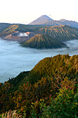 Mount Bromo volcanoes in Tengger Caldera, East Java, Java island, Indonesia, South East Asia