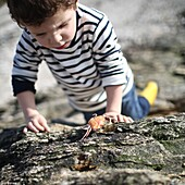 3 years old boy looking at a crab near the beach