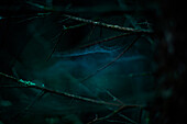 Close up of cobwebs on branches in dark forest