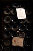 Old Wine Bottles Aging in Cellar