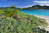 tropical beach with sailing ship, sea, Sandy Island, Carriacou, Grenada, Lesser Antilles, West Indies, Windward Islands, Antilles, Caribbean, Central America