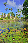 Pond with water lilies, Codrington College, Condrington Plantation, Barbados, Lesser Antilles, West Indies, Windward Islands, Antilles, Caribbean, Central America