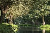 Blick vom Wasser aus auf Flusslandschaft und Ufer-Vegatation im Biosphärenreservat Spreewald vom Wasser aus bei Sonnenschein. Fischreiher sitzt am Ufer, Biosphere reserve, Schlepzig, Brandenburg, Deutschland