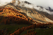 Golden autumn with lark forest in Schnalstal, South Tyrol, Italy