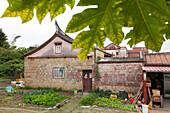 Farmer house, garden, vegetable, traditional architecture, Jincheng, Kinmen County, Kinmen Island, Quemoy, Taiwan, Asia