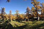 Autumn on the Eulenwiese in the Stubai Valley, Stubai Alps, Tyrol, Austria
