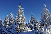 The snowy top of Gleinser Mountain, Stubai Alps, Tyrol, Austria
