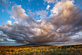 Dramatic clouds over Mount Hualalai and evening light on Fountain Grass, North Kona, Kona, Island of Hawaii, Hawaii, United States of America