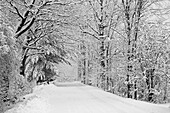 A snow covered road lined with leafless trees in winter, Brome Lake, Quebec, Canada