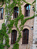 Vine climbing a wall in a building found in one of Italy's famous piazzas, San Gimignano, Siena, Italy