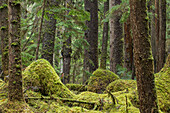 The moss covered floor and trees of Naikoon Provincial Park, Haida Gwaii, British Columbia, Canada