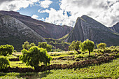 The late afternoon sun lights up the trees and landscape, Toro Toro, Bolivia