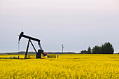 Pumpjack at work on oilfield lease in a canola field in rural Alberta, St. Albert, Alberta, Canada
