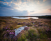 Daybreak over Connemara Bog with heather in bloom, County Galway, Ireland