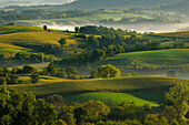Agriculture - Dairy land at sunrise showing cornfields, alfalfa fields, dairies, silos and fog in low lying areas  Southwest Wisconsin, USA.