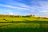 Agriculture - Healthy green rolling pasture with oak trees  Butte County, California, USA.