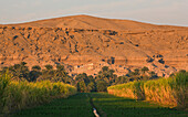 Agricultural Land With Sugar Cane On A Small Island On The Nile, Egypt