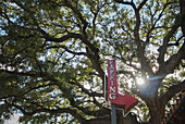 An old tree looms over a vintage, red parking sign next to a parking lot, Austin, Texas, United States of America