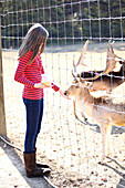 Caucasian girl feeding reindeer on farm