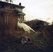 Bird standing on hillside