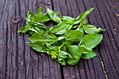 Close up of fresh basil leaves on board