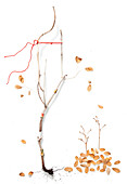 Dry branch with scattered autumn leaves