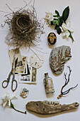Vintage photographs, nest, scissors and natural objects