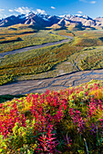 Scenic view of Polychrome Pass with colorful fall colors in the foreground in Denali National Park, Interior Alaska, Fall, USA.