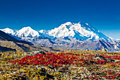 Scenic view of Mt. McKinley with red fall tundra in the foreground in Denali National Park, Interior Alaska, Fall, USA.