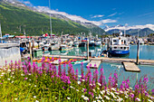 View of Fireweed, kayaks and seine fishing boats in the Valdez boat harbor, Southcentral Alaska, Summer.