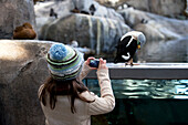 Young girl takes a photo of a male Eider at the Sea Life Center, Seward, Alaska